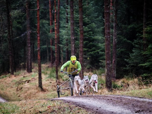 Sled dog racing in Dalby Forest