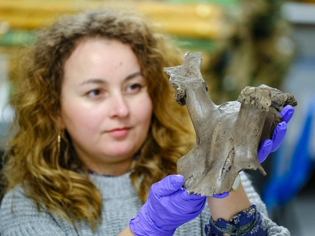 Ela Bochenek, documentation assistant at Scarborough Museums Trust, with the Star Carr antler headdress