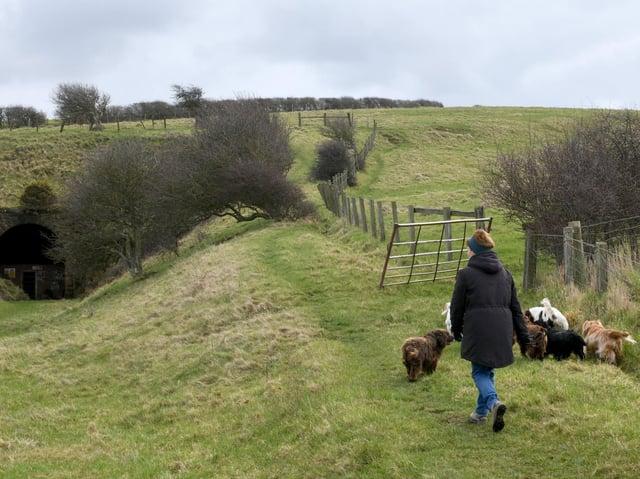 Dog walking in Sandsend, near Whitby