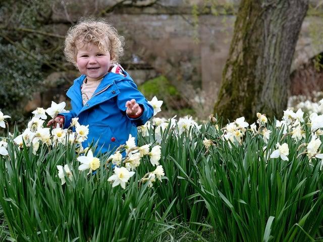 Teddy enjoying a springtime stroll in Ayton.