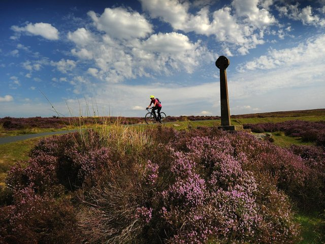Heather on the North Yorkshire Moors, above Rosedale Abbey.