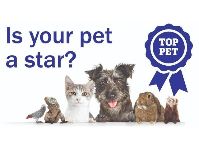 Is your pet a star?