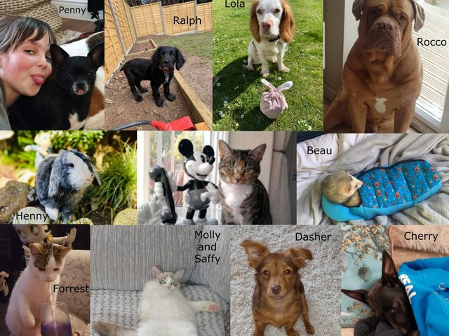 Top Pet Finalists
