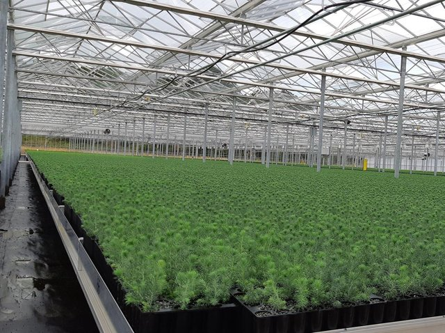 Photo of a Forestry England nursery. Issued by Forestry England
