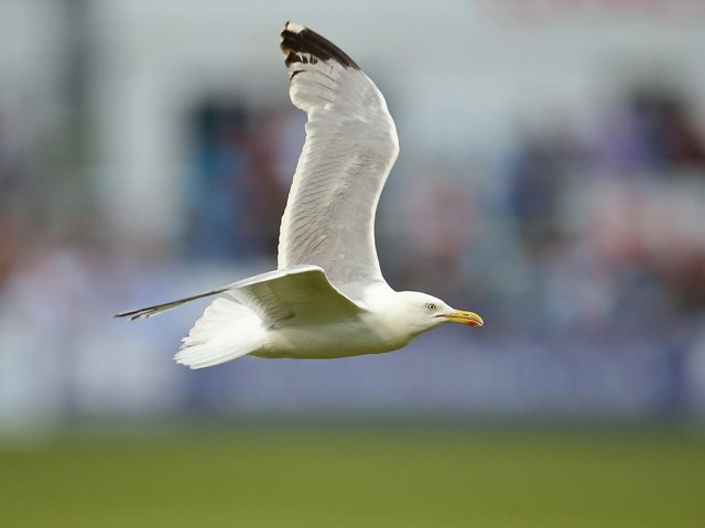 Stock image of seagull. Picture: Getty Images