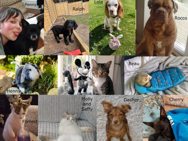 Our Top Pet Finalists
