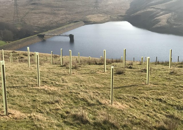 Yorkshire Water's tree planting at Gorpley in partnership with the Woodland Trust. Photo submitted