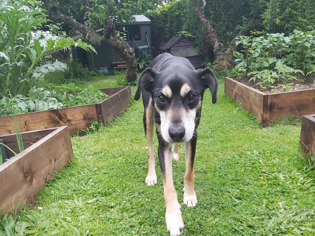 15-year-old Bill has undergone multiple surgeries and months of rehabilitation and has now been rehomed.