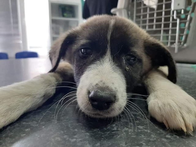 Sukie requires life-saving surgery or faces the possibility of euthanasia.